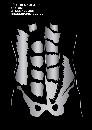Rörelseapparatens Anatomi - En muskel- och triggerpunktsguide